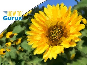 Photoshop Elements Impressionist Brush: Make an Impressionistic Painting in 15 14 13 12 11 Tutorial