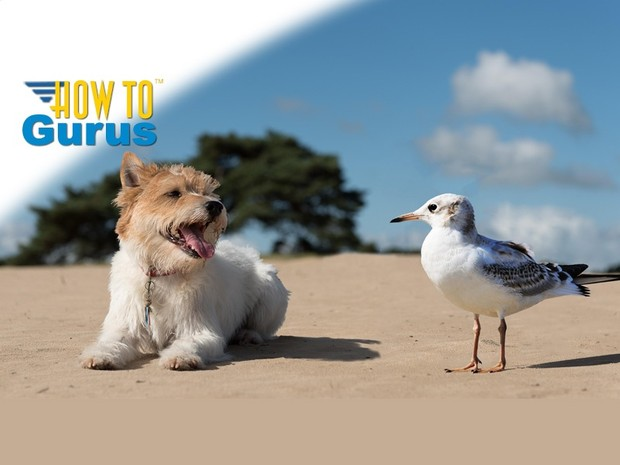 How to Combine and Move Animals in a Photo with Photoshop Elements 11 12 13 14 Tutorial
