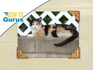 Photoshop Elements Scrapbooking Tutorial : Custom Photo Corners in 15 14 13 12 11