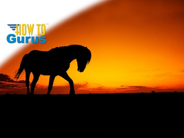 How to do a Horse Silhouette Photo Manipulation in Photoshop Elements 14 13 12 11 Tutorial