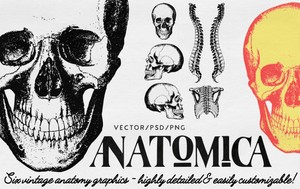ANATOMICA - high-resolution, easily customizable, vector/psd/png graphics pack