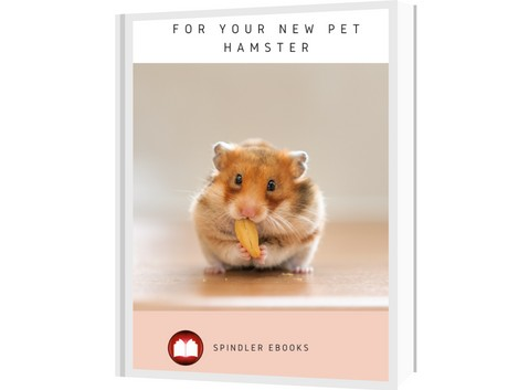 For Your New Pet Hamster