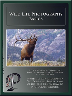 How to Photograph Wildlife PDF
