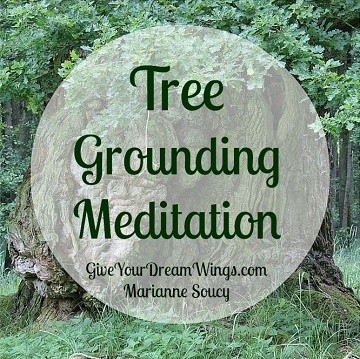 Tree Grounding Meditation
