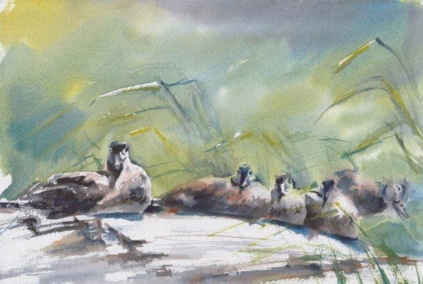 """Ducks in a Row"" Watercolor Original"