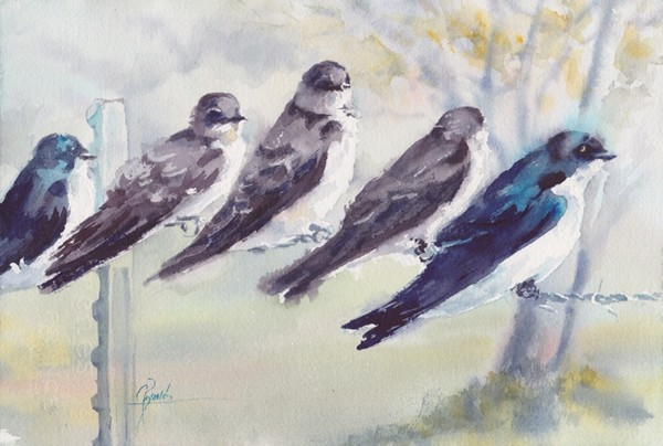 """Tree Swallows"" Watercolor Original"