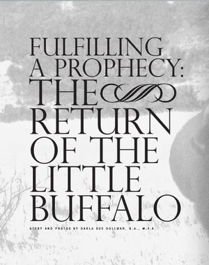 Fulfilling a Prophecy: The Return of the Little Buffalo