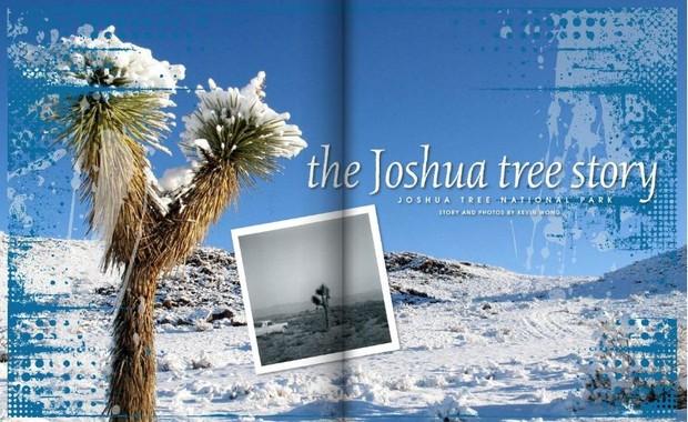 The Joshua Tree Story