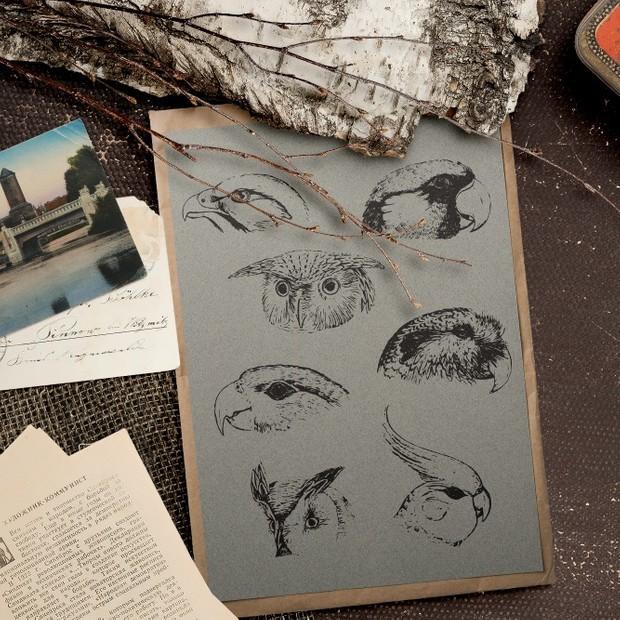 Birds and parrot head vector eps