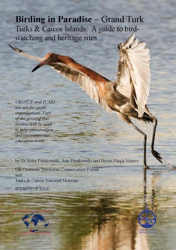 Birding in Paradise- Grand Turk