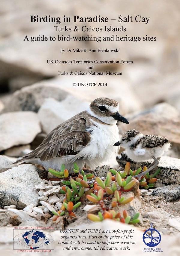 Birding in Paradise - Salt Cay