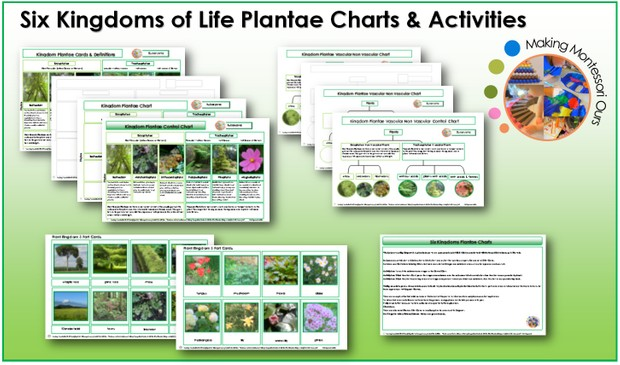 Six Kingdoms Plantae Materials & Labels Printable Package