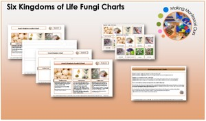 Six Kingdoms Fungi Chart & Labels Printable Package