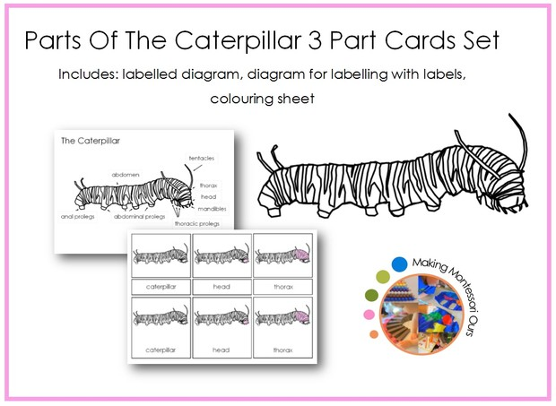 Caterpillar Montessori 3 Part Card Package