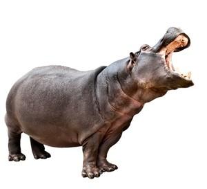 HIPPO AR MARKER