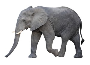 ELEPHANT AR MARKER