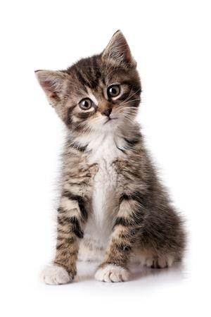 CAT MARKER AR