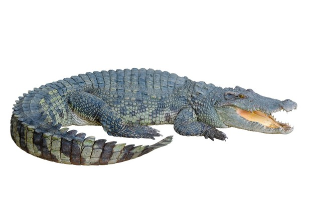 CROCODILE AR MARKER
