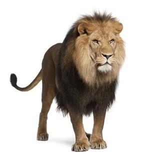 LION AR MARKER
