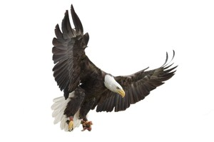EAGLE AR MARKER