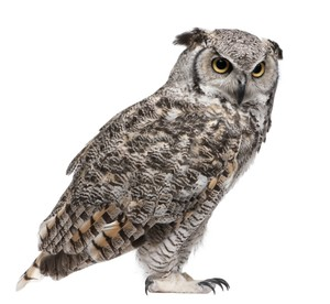 OWL AR MARKER