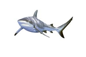 SHARK AR MARKER