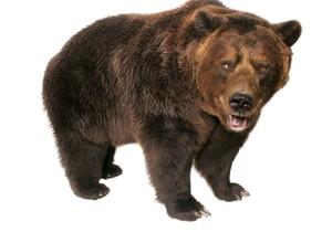 BEAR AR MARKER