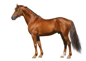 HORSE AR MARKER