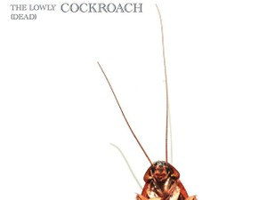 The Lowly (Dead) Cockroach