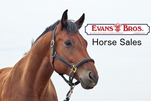 Evans Bros Horse Sale Catalogue for May 2017