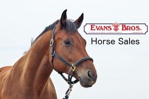 August 2017 Horse Sale Catalogue