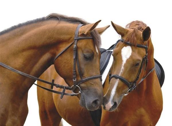 September 2013 Horse Sale Catalogue