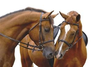 August 2013 Horse Sale Catalogue