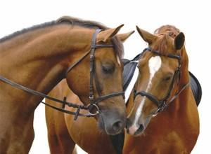 April 2013 Horse Sale Catalogue